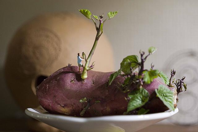 根が伸びてインテリアに使えそうな様相になったサツマイモ
