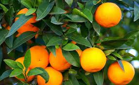 ruta-de-la-naranja.jpg