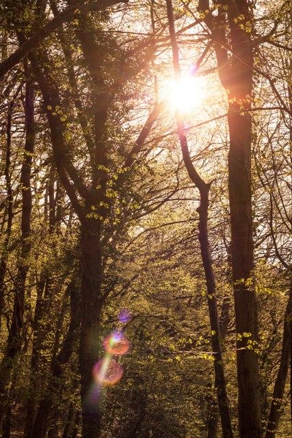 Waldwanderung Lichtreflektion