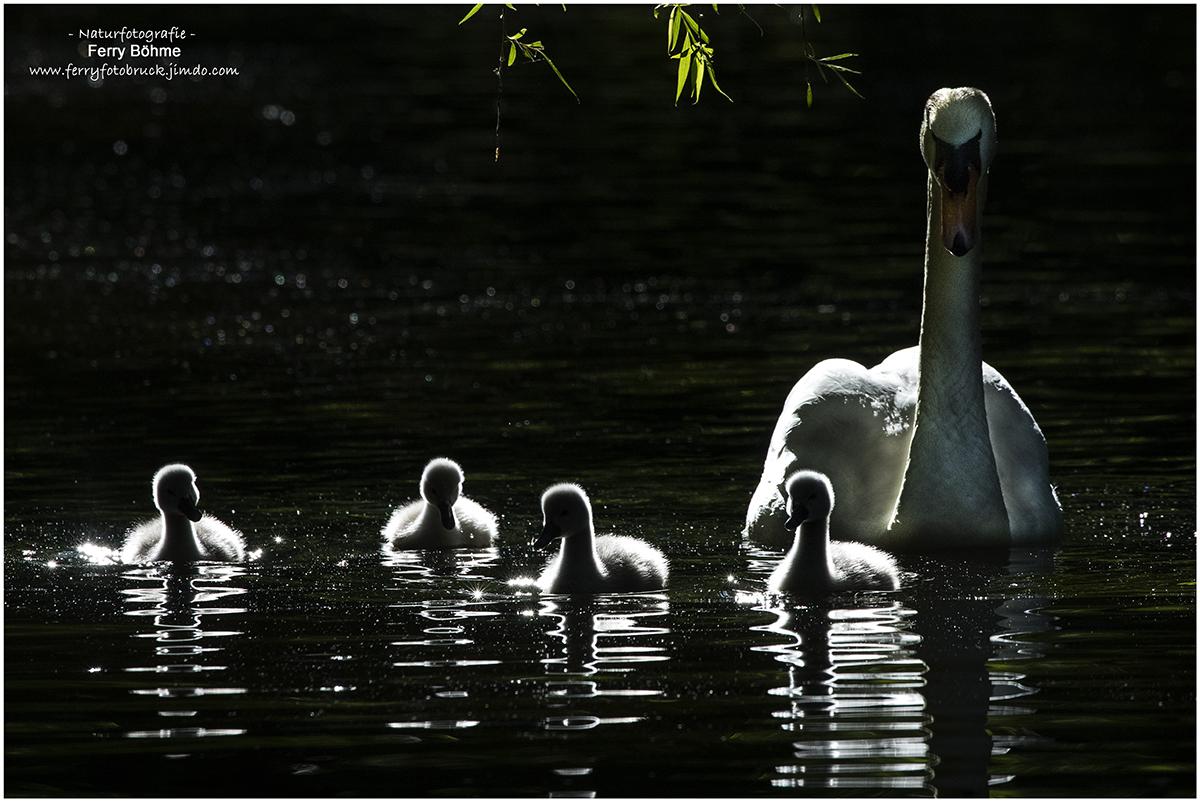 Familienausflug im Gegenlicht