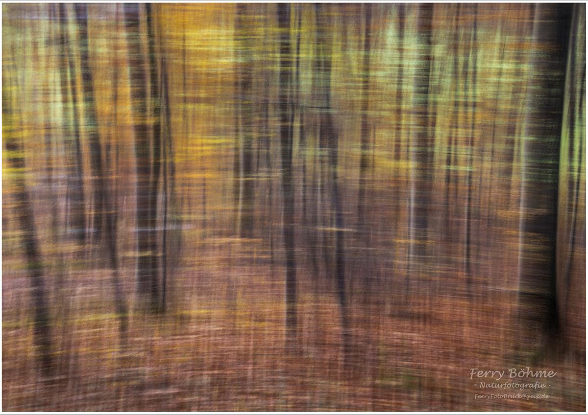 Pastellkreide auf Leinwand - Wischer im Herbstwald (ohne Photoshop!)