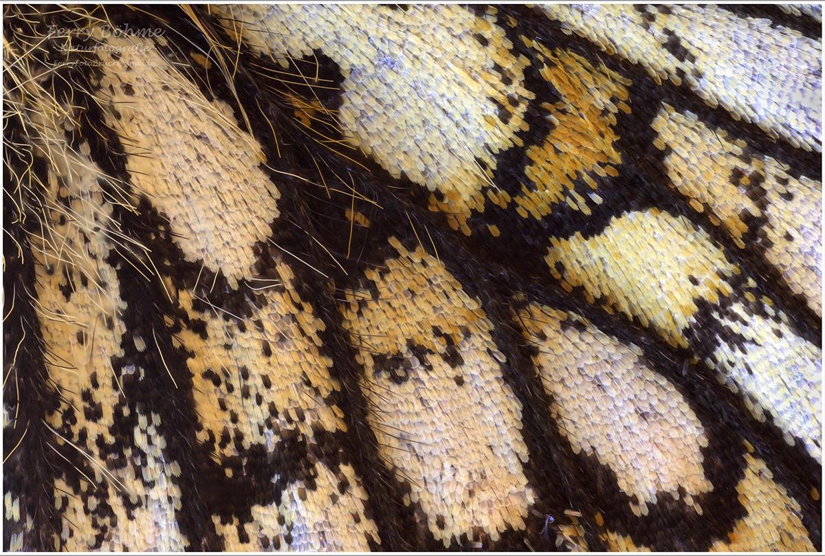 Schmetterlingsflügel Unterseite
