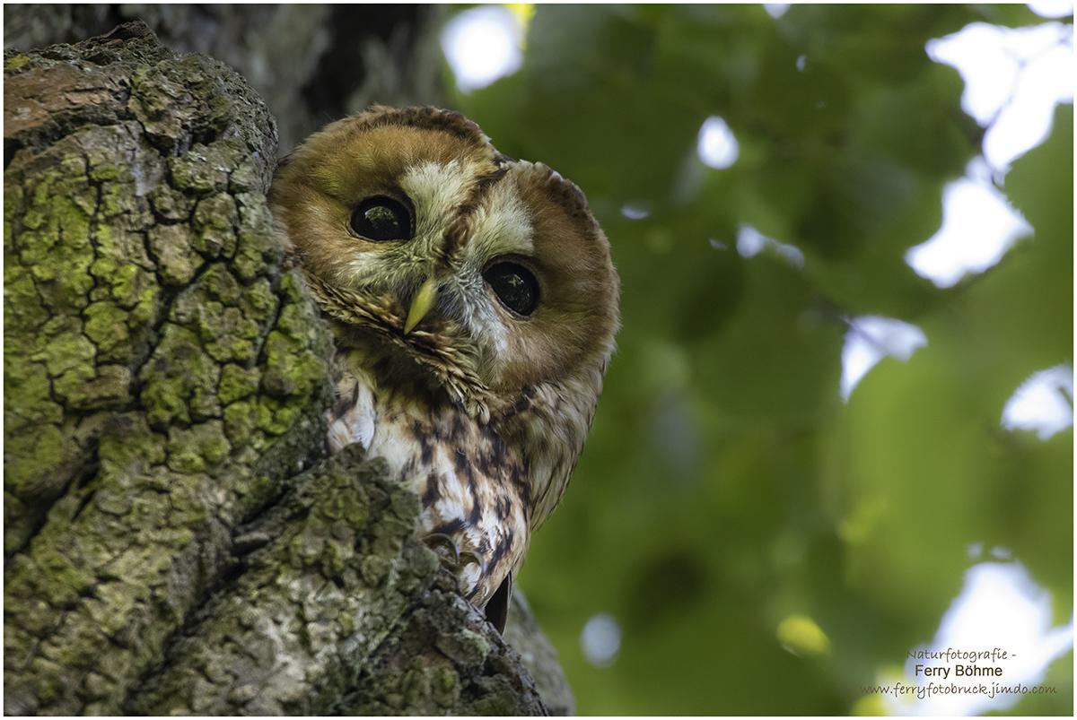 Mal schauen, wer da am Baum unten steht ...