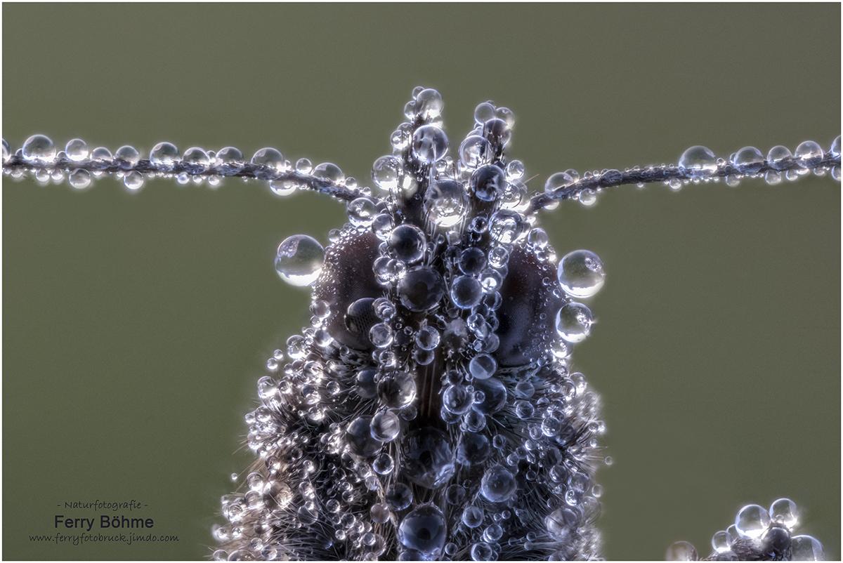 Taumonster - Schmetterling frontal