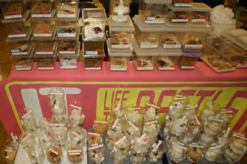 『 LIFE THE BEETLE 』さんの豊富な商品群。