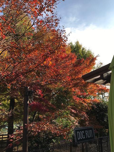 秋の紅葉も見事です