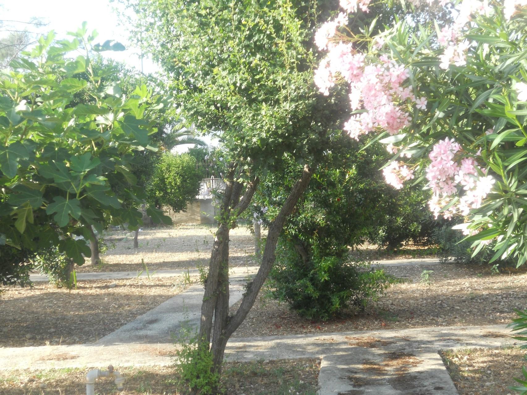 Een hoekje van de tuin.