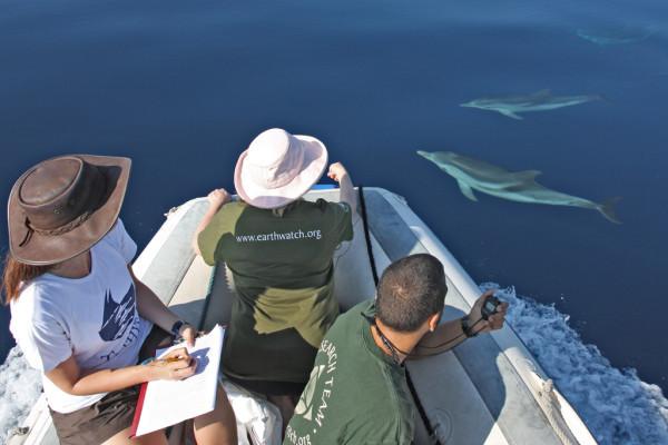 Toeristen en dolfijnen in de golf van Taranto ( foto van het Ionian Dolphin Project).