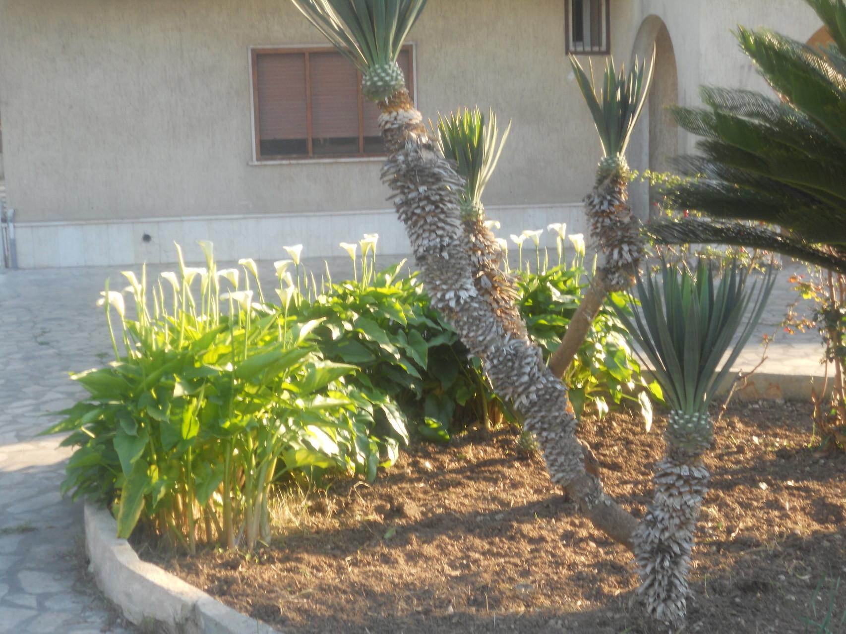 Bloemperk in het centrum van de tuin van de villa.