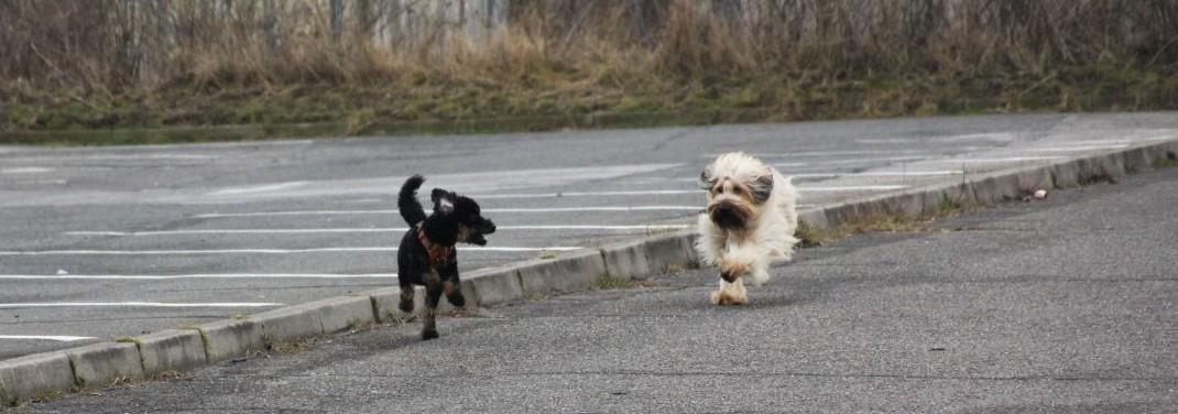 erstes Kennenlernen zwischen Momo & Hermine auf dem Parkplatz