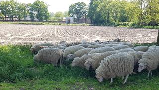 Alle aanwezige PROBUS schapen...