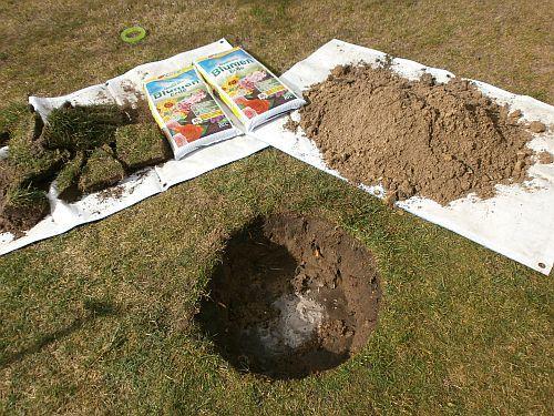 In das Pflanzloch kam eine Mischung aus Hornspäne und neuer Blumenerde