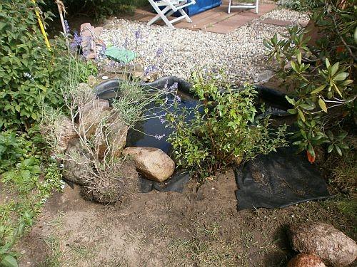 Neue Pflanzen kamen an die Rückseite des Teiches ...