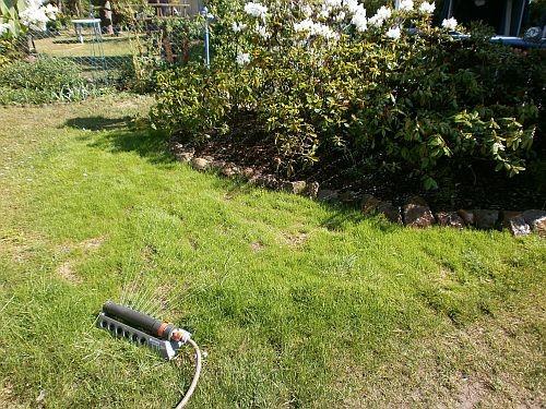 Die Rasensaat musste viel gewässert werden