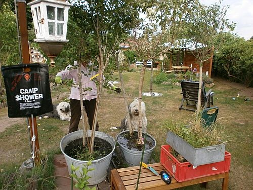Die fünf neuen Bäumchen mussten zuerst ausgiebig gewässert werden