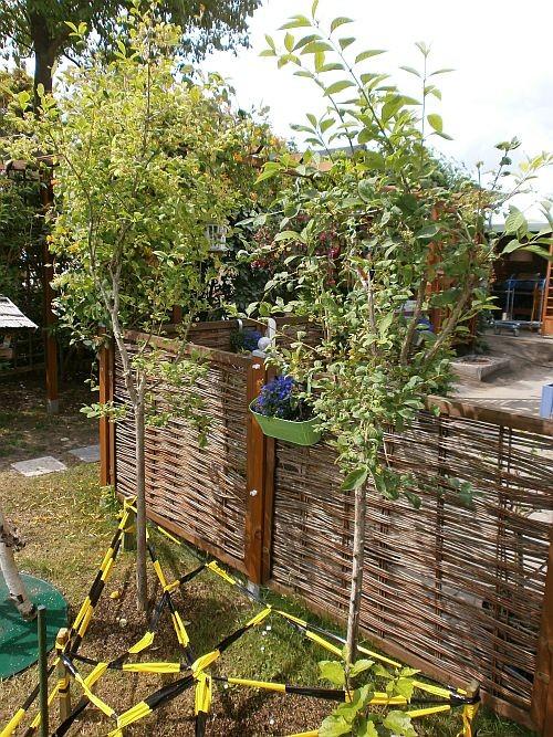 Zwei Pfaffenhütchen-Bäumchen stehen jetzt vor der Terrasse