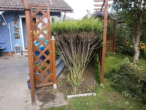 Wir kürzten die vorstehende Hecke um zwei Büsche ein und gruben beide aus