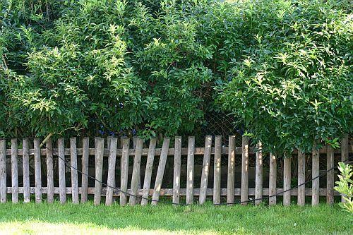 Wir hatten noch drei alte Zaunfelder von den Nachbarn zur Verfügung ...