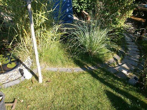 Der vordere Teichbereich wurde vergrößert, damit das Pampasgras genügend Platz hat