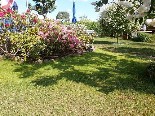 Eine wunderschöne Rasenfläche vor dem Hain Ende Mai 2013