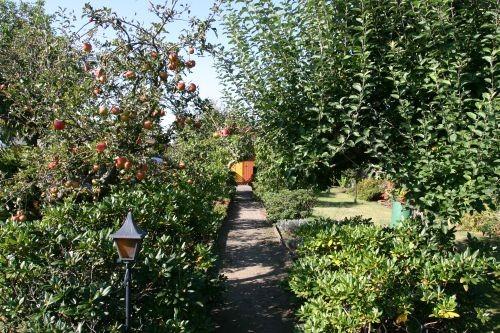 Der Blick in den wuchernden Garten