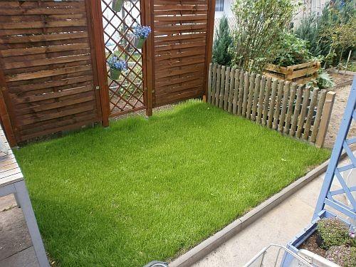 Schon nach 5 Wochen ist ein schöner Rasen entstanden
