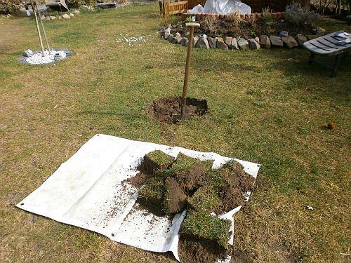 Das Pflanzloch des Baumes sollte mindestens drei mal so groß sein wie der Pflanzenballen