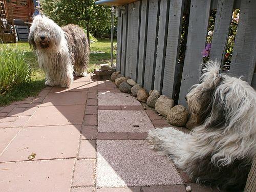 Jetzt fühlen sich die Hunde noch wohler und der Bodenbereich wirkt großzügiger