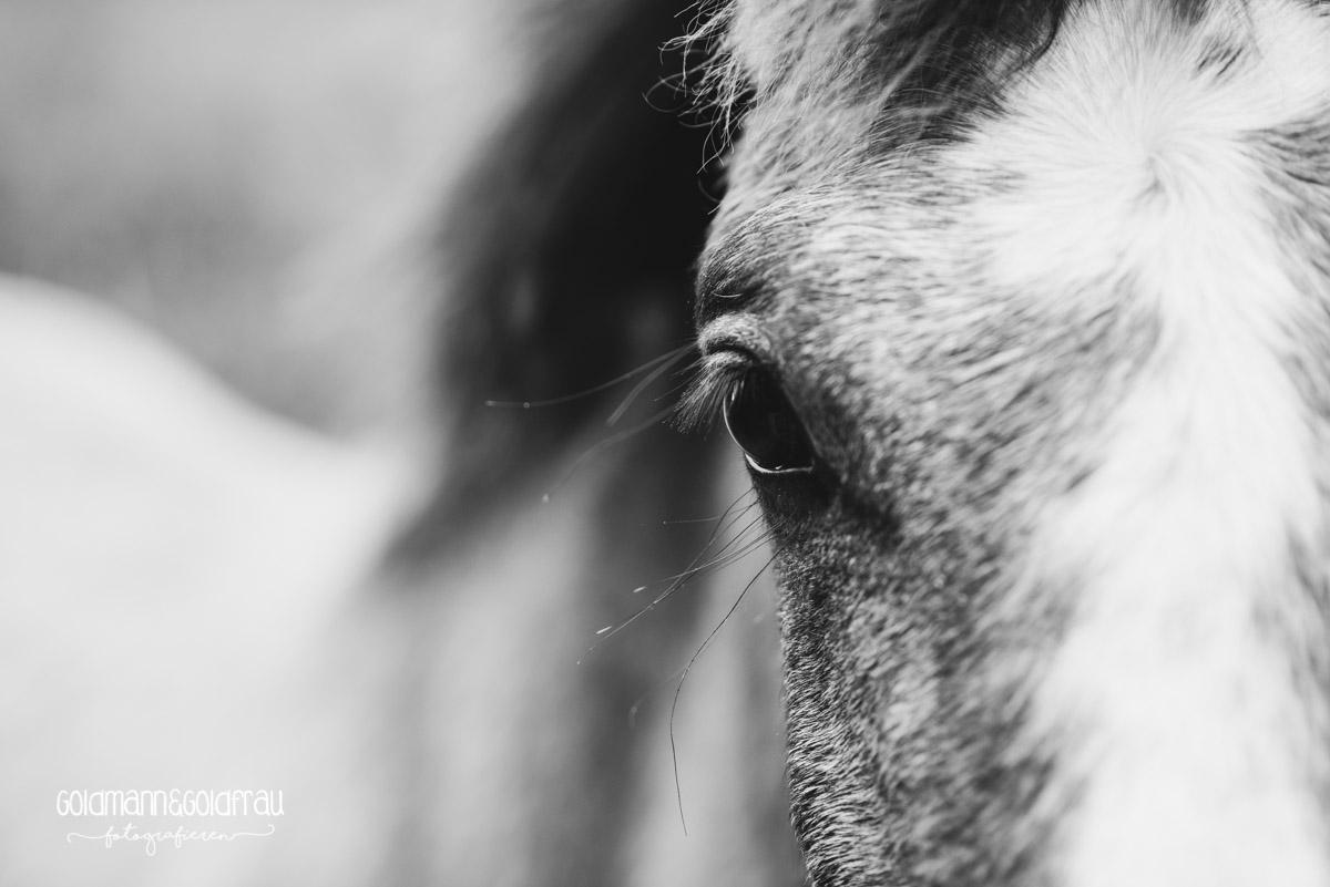 """Ein junges Connemara Pony in """"unserem"""" Garten"""