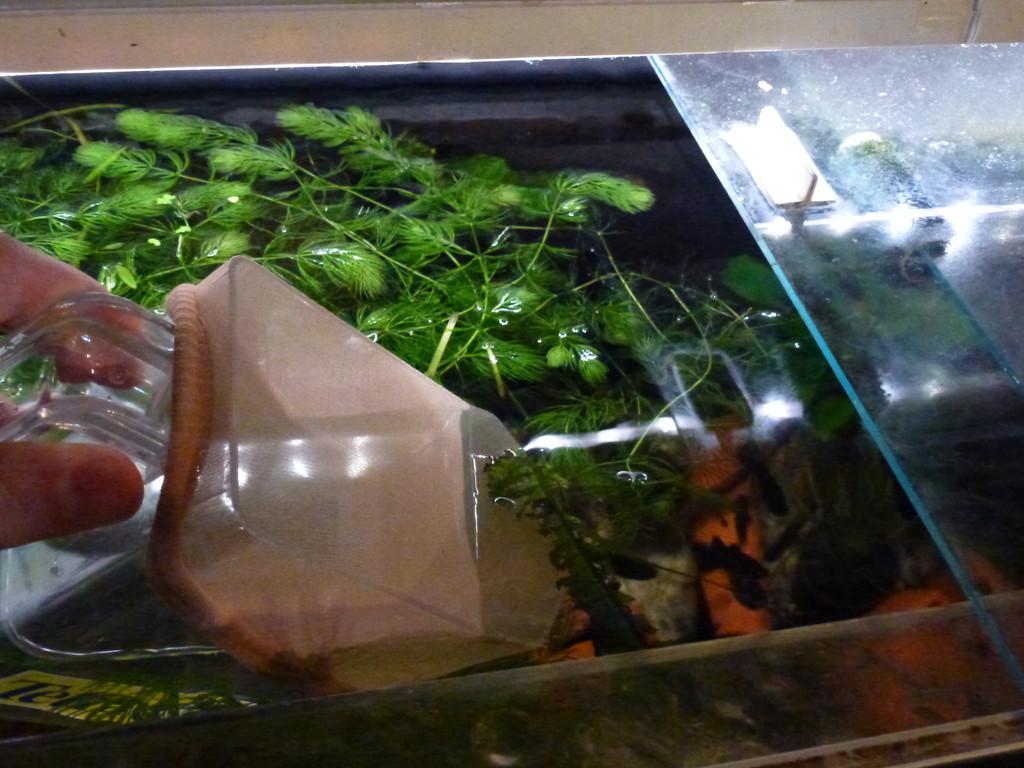 Dann kann man ohne auf Fische aufpassen zu müssen Wasser aus dem Aquarium abschöpfen...