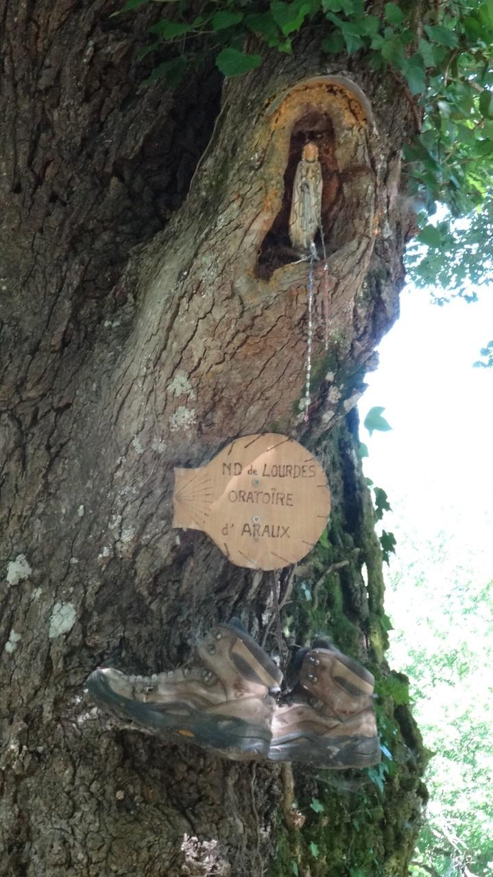 Un arbre pélerin