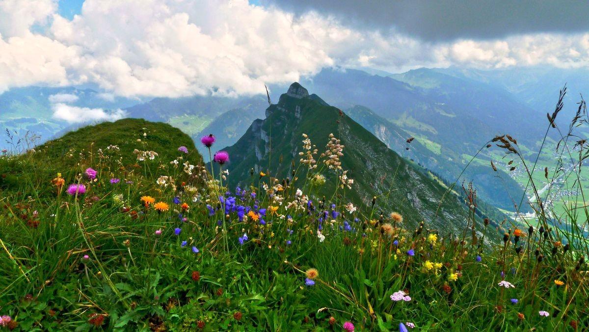 Blumen auf dem Gipfel der Holenke