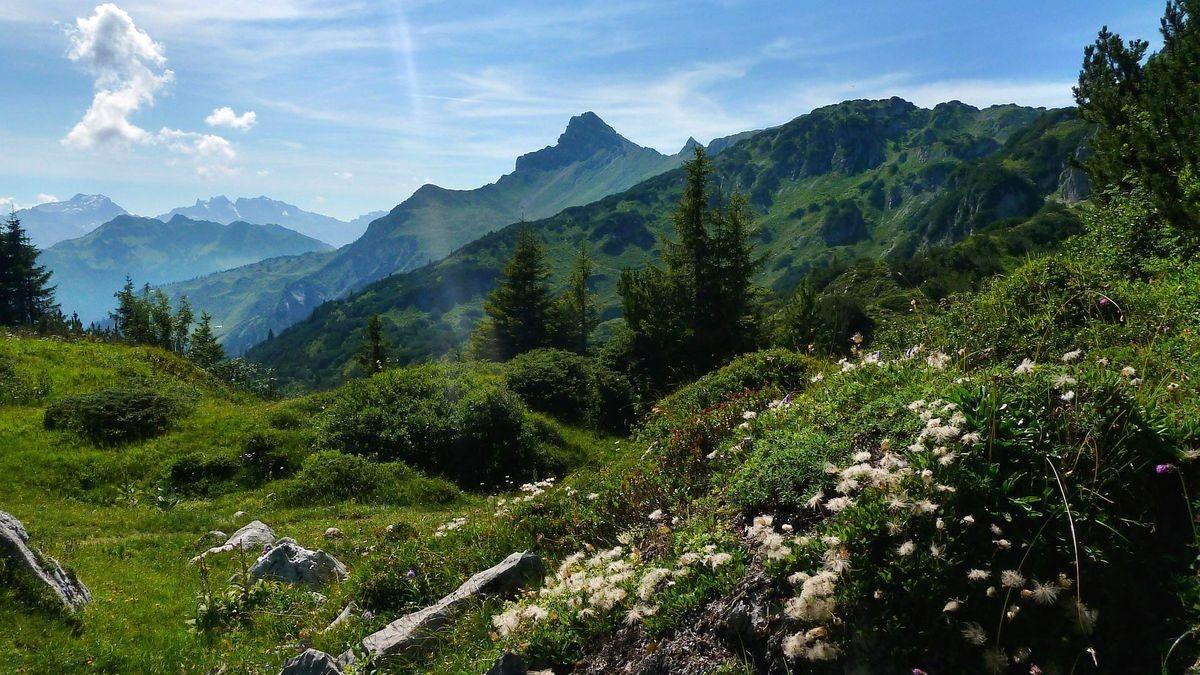 Abgeblühte Nelkenwurz bei der Freiburger Hütte - Blick ins Rätikon