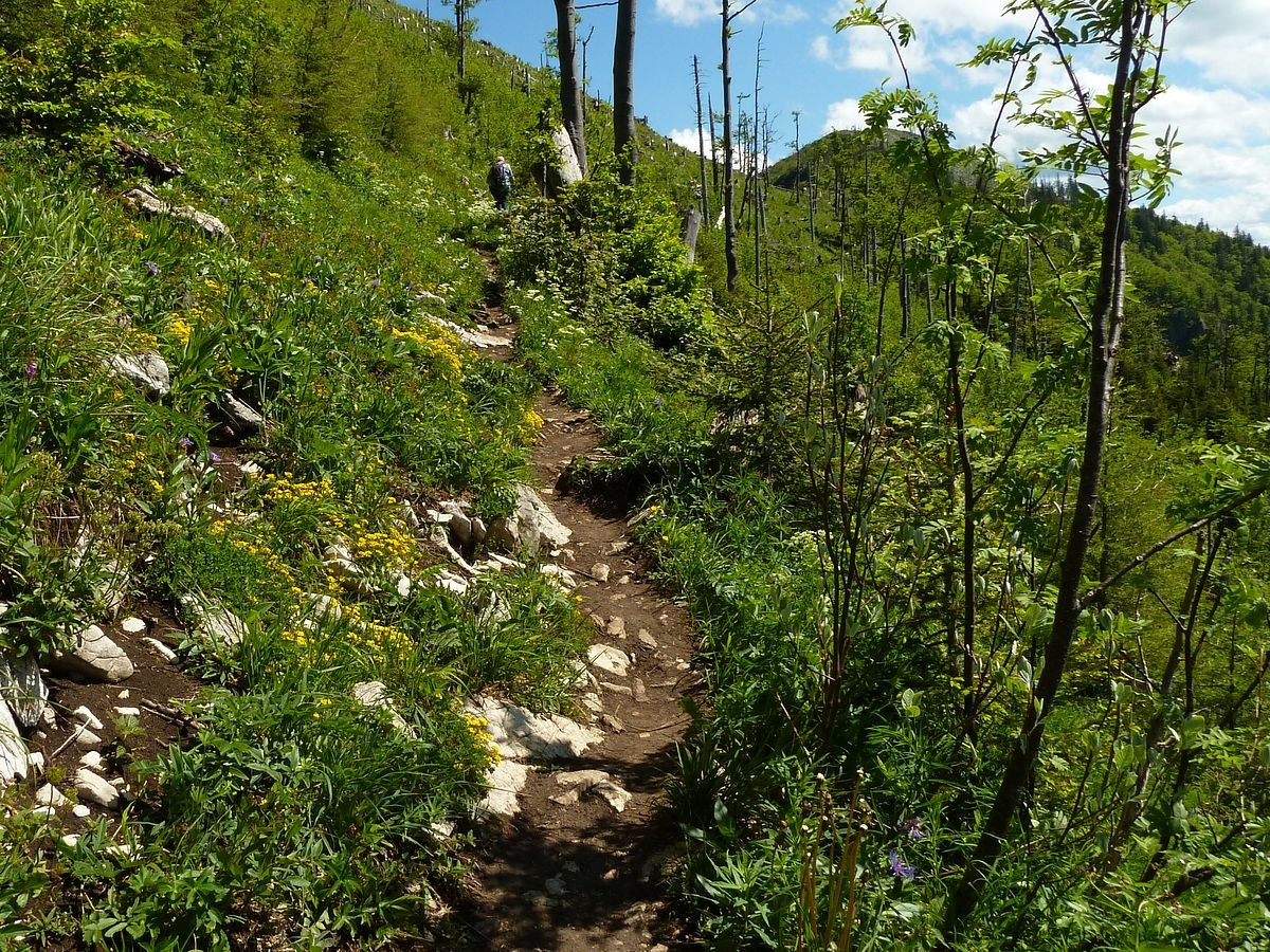 Steig zwischen Ennser Hütte und Almkogel