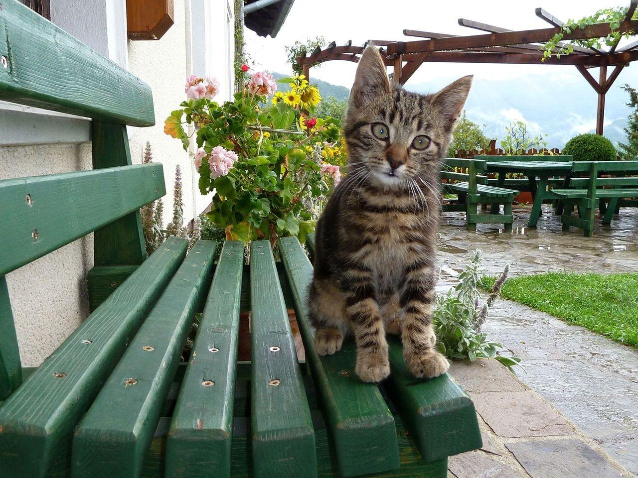 Katzennachwuchs auf Rabenreith