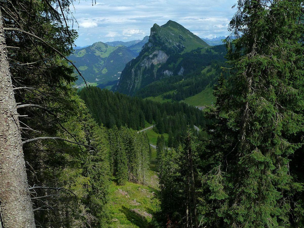 Blick durch eine schmale Waldschneise am Kojenkopf zur Kanisfluh
