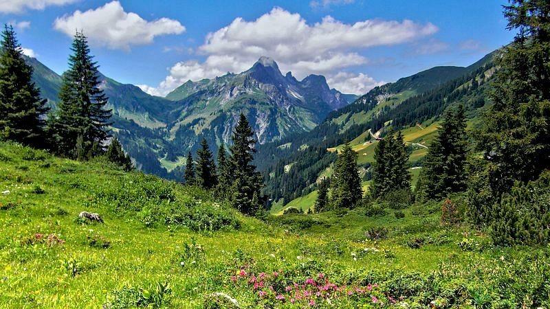 Die Hochkünzelspitze vom Wanderweg. Vorne Alpenrosenbestände in der Wiese.
