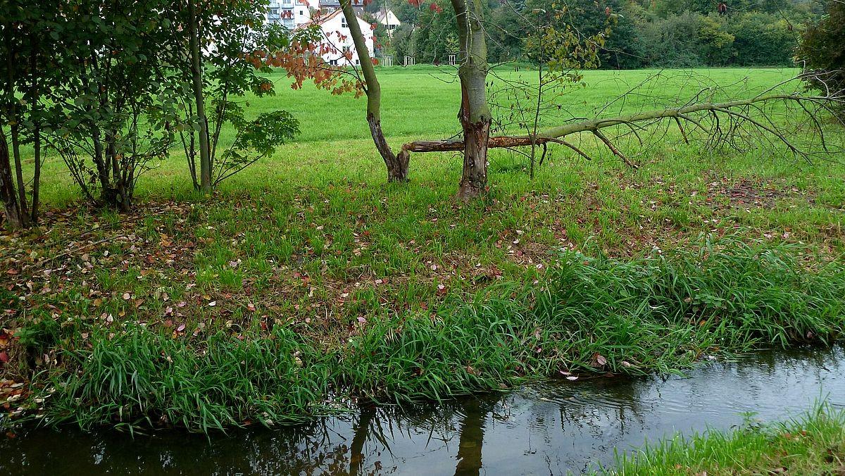 Biberschaden am gefällten Baumstamm am Scherbsgraben nördlich der Flutbrücke