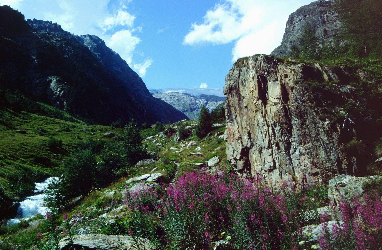 Weidenröschen im Schutz von Felsen. Das Tellital aufwärts.