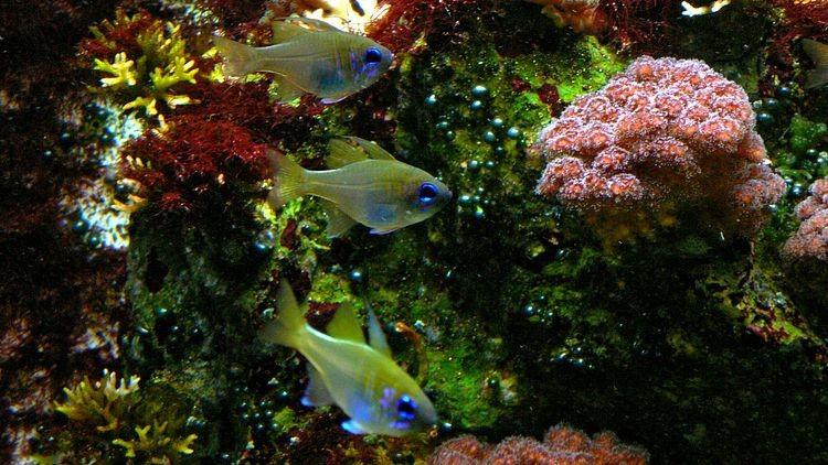 Aquarium in der Wilhelma Stuttgart