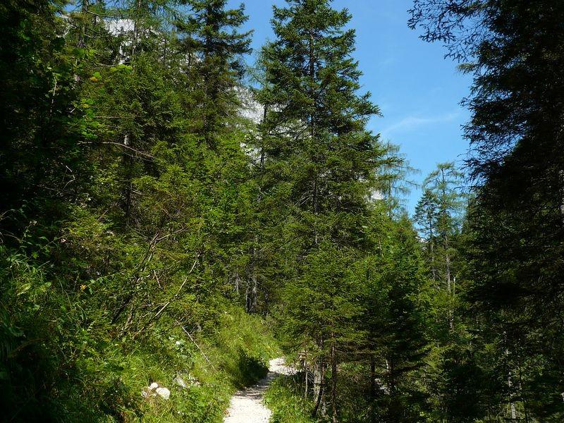 Steig im bewaldeten Tobelhang zur Zimitzalm.