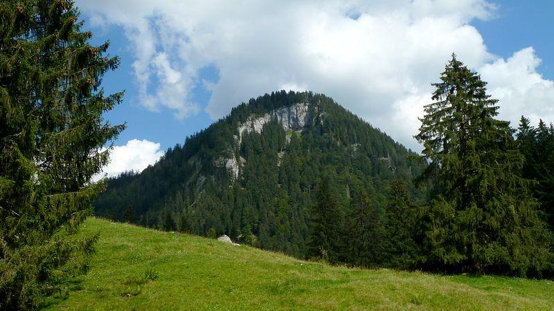 Waldwiese bei der Wildfütterungsstelle