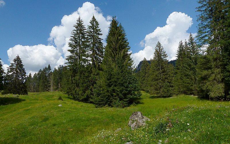 Waldwiese bei der Wildfütterungsstelle.