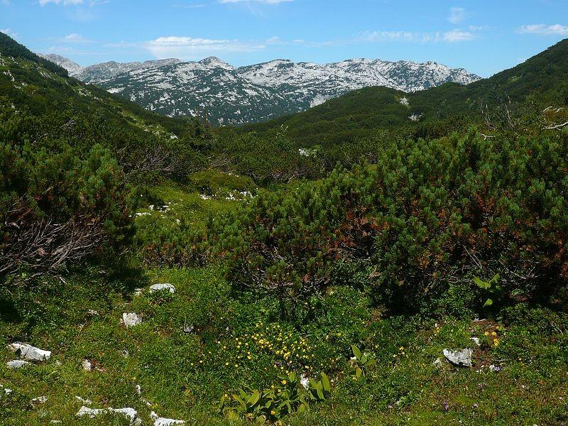Auf dem Hochplateau des Toten Gebirges im Berich des Trisselbergs