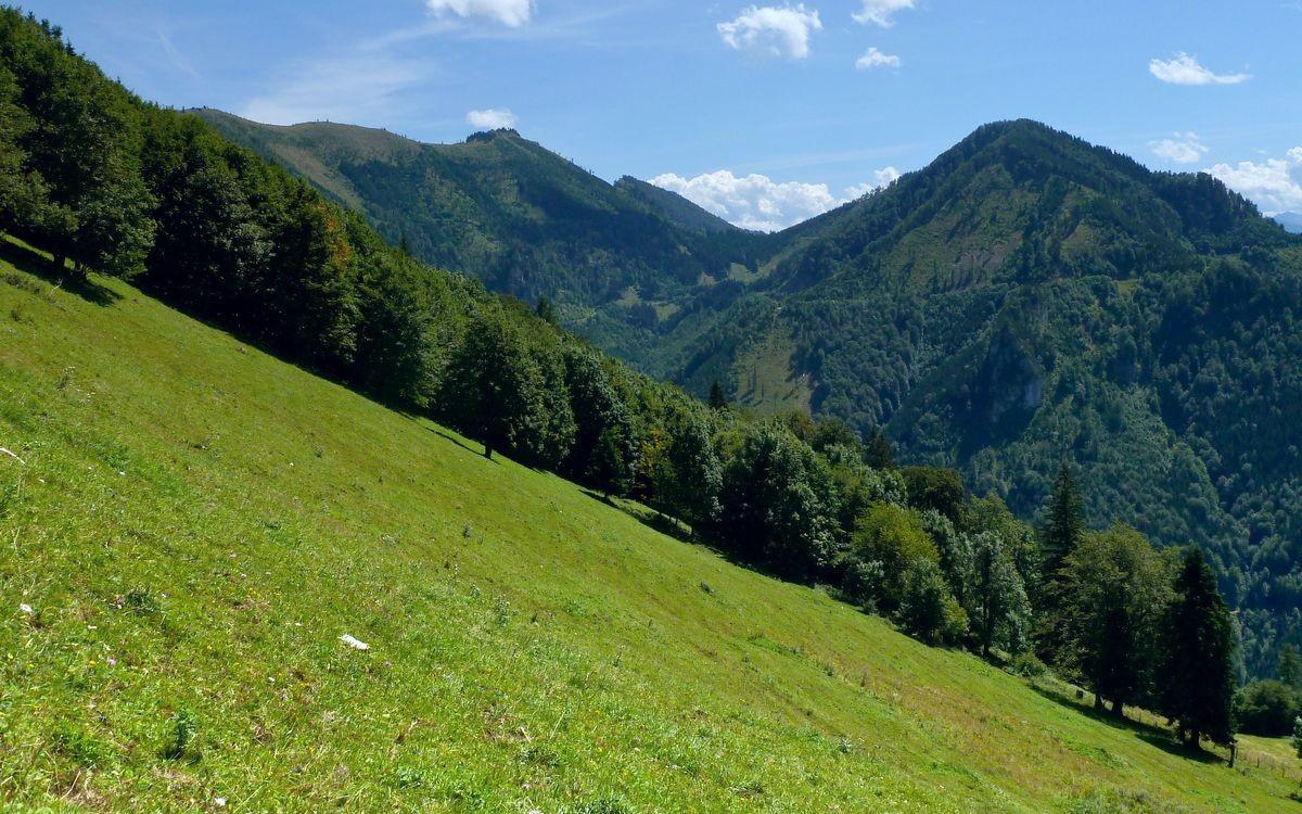 Steile Almwiese zum Gamsstein. Almkogel und Höhenberg im Hintergrund.
