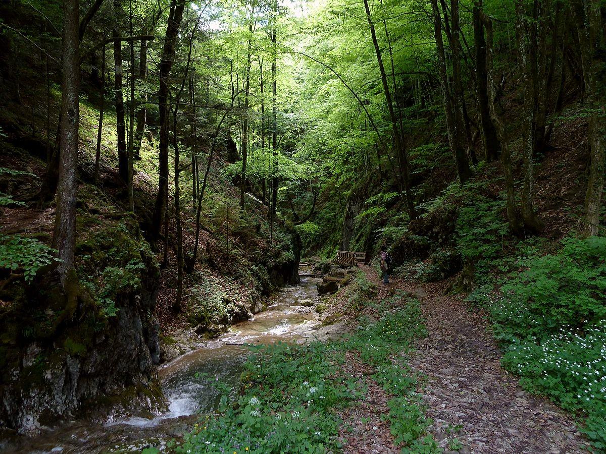 Wegstück zwischen Wasserfall und Lehneralm