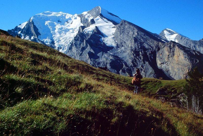 Auf dem Weg zur Aussichtskanzel: Jagdaufseher und Gemsen vor der Balmhorn-Altels-Nordflanke