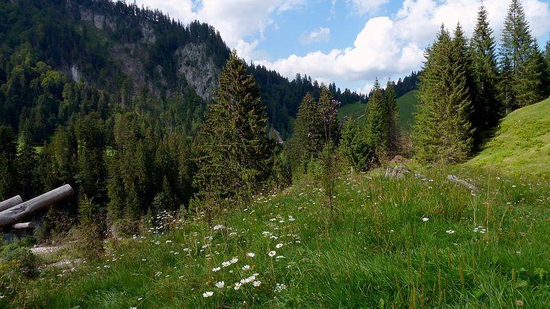 Waldweide bei der Wildfütterungsstelle