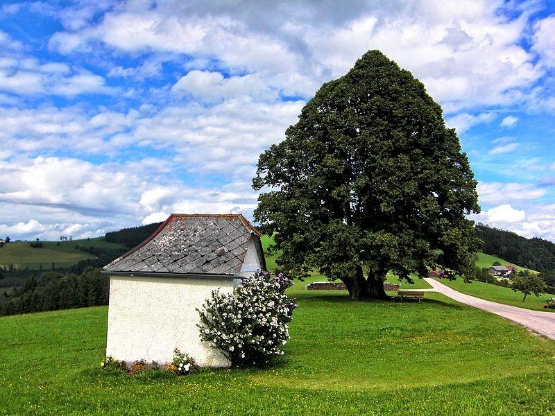 Kapelle und uralte Linde auf einem Sträßchen zwischen St. Georgen und Maria Neustift