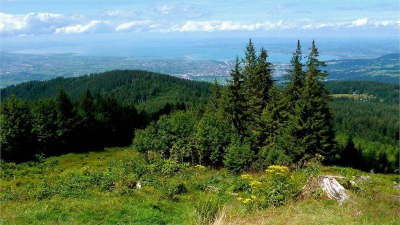 Blick aus dem Gebiet der Alpe Obere Lose auf und über den Bodensee
